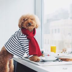 """Today the fluffiest pup in the big apple is taking over the Lucy & Co. feed. Check out @lucyand.co to say hello to Cookie and enjoy a day filled with art and fluff from @PS.NY  Cookie says: """"Never work before breakfast; if you have to work before breakfast eat your breakfast first! by: @dogsofinstagram"""