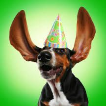 gefeliciteerd hond humor