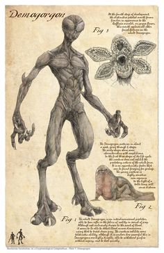 Bestairum Vocabulum, or, a Cryptozoological Compendium Plate 7 DemogorgonThe Demogorgon in the style of a vintage naturalist featuring text describing the creatures attributes and habitats The print is and will be mailed in a poster tube to e - d Mythical Creatures Art, Mythological Creatures, Magical Creatures, Fantasy Monster, Monster Art, Demogorgon Stranger Things, Myths & Monsters, Legends And Myths, Creepy Art