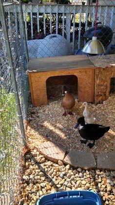 Cute duck home