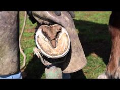 How to trim horse hooves: learn barefoot trimming the GoBarefoot way - YouTube