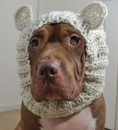 Polar Bear Dog Snood Made to Order by courtanai on Etsy, $35.00