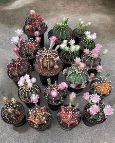Spectacular photos of desert plants by Wachirapol Deeprom, a gifted self-taught photographer, and cactus lover currently based in Bangkok, Thailand. Flowering Succulents, Types Of Succulents, Growing Succulents, Cacti And Succulents, Planting Succulents, Planting Flowers, Flowers Garden, Vegetable Planting Guide, Planting Vegetables