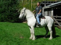 Joe and our Percheron Gypsy! Picts, My World, Gypsy, Horses, Fun, Animals, Animales, Animaux, Horse