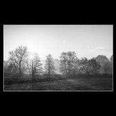 Die Natur ist aller Meister Meister - sie zeigt und erst den Geist der Geister. - J. W. von Goethe  #art #sun #trees #sunlight #nature #fotografie #goethe #beautiful #pictorialism