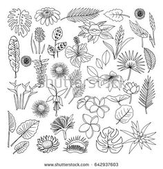 Find Tropical Flowers Sketch Style Vector Illustration stock images in HD and millions of other royalty-free stock photos, illustrations and vectors in the Shutterstock collection. Flower Line Drawings, Flower Sketches, 3d Drawings, Drawing Flowers, Tropical Flowers, Exotic Flowers, Tropical Style, Tropical Leaves, Tropical Plants