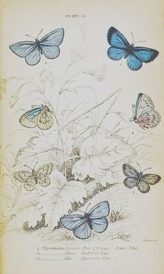 Vintage #butterfly print