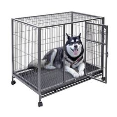 Metal Wire Playpen, All Sizes, All Colors...Read More at http://www.hellosausage.com/puppy-playpen/