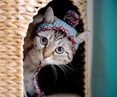 """This photo provided by Running Press and Quarto, Inc. shows Bobbie Hat from the book, """"Cats in Hats,"""" published by Running Press. The book"""
