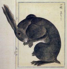 "booglarized: Artist Takagi Haruyama, 1850's, Japan, Edo period, ""Rabbit"""