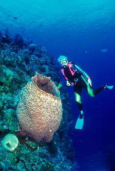 Barrel sponge (diver shown for size comparison) near Randy's Gazebo, Little Cayman Island Marine Park