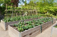 Build a raised garden bed - Chicago Tribune