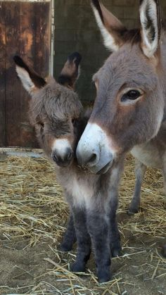 Those sweet faces!! (Séäneen Tara McArdle ~ ‎Only Donkeys December 4, 2015)