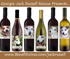 As a  Jack Russel fan/owner, you obviously appreciate the finer tings in life – like wine! Or  maybe you just need something to steady your nerves after your Jack's latest adventure … ;) Whatever the case, we are excited to introduce our new line of Jack Russell wines at benefitwines.com.