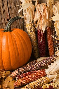 Pumpkins and Indian corn, a sign of fall.