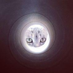Cat Tina