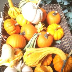 Autumn is here :: Search by flavors, find similar varieties and discover new uses for ingredients @ preppings.com