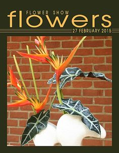 27 February 2015… A Year in Flowers PLANT LIST: Alocasia & Heliconia FROM: www.FlowerShowFlowers.com