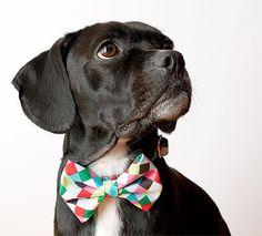 Collares para mascotas fashion victim