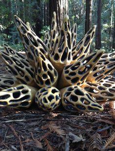 Hive Series (detail) at Nisene Marks State Park  www.jenniward.com