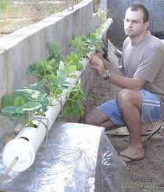 BRAZUCA DE KIMONO: Montando uma horta hidroponica caseira, parte 1