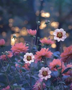 (8) Tumblr Elegant Flowers, Beautiful Flowers, Beautiful Pictures, Dps For Girls, Welcome Spring, Spring Has Sprung, Good Morning Wishes, Nature Images, Tumblr