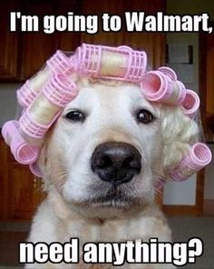 66 Trendy funny pictures with captions walmart humor Funny Dog Captions, Animal Captions, Funny Animals With Captions, Dog Quotes Funny, Funny Pictures With Captions, Funny Animal Memes, Animal Quotes, Cute Funny Animals, Funny Animal Pictures