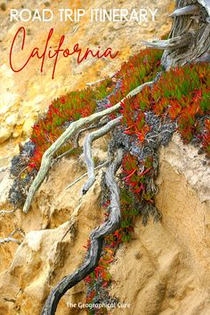 Planning a vacation in California? Here's the ultimate guide to an adjustable 10 day road trip itinerary for Southern California. The west coast of California is tailor made for road tripping. Southern California boasts high mountains, giant trees, deserts, valleys, and stunning beaches. If you're looking for things to do and see in southern California or the best places to stop on a California road trip, this guide's for you. #California #US RoadTrips #SoCal #LA #San Diego | US Travel
