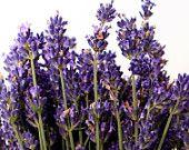 Fernleaf Lavender Seeds   Lacey Ice-Blue Foliage Blue Violet Flowers Gorgeous Lavender Fragrance Lavender Seeds, Flowers, Plants, Summer, Summer Time, Plant, Royal Icing Flowers, Flower, Florals