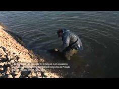 Projeto SAL DO SOL - Po Pesca | PROMAR - YouTube