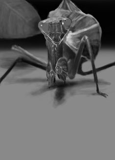 MCC student digital painting - mantis Digital Drawing, Drawing Examples, Drawings, Painting, Artwork, Digital Painting