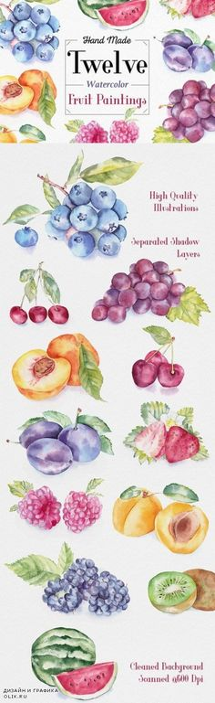 Fruit Watercolor Illustrations - 334077