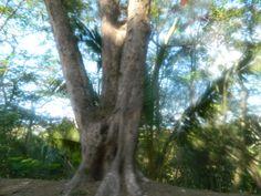 Rarotonga, nature at its finest.