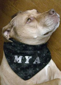 Halloween dog bandana (used 2 fabric designs for double sided) with iron on letters ♥Mya
