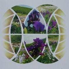 Bouquet d 'Iris....