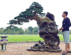 Meanwhile in Vietnam...a cascade bonsai...