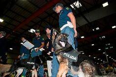 Umbria: Ecco i #cani che salvano le vite (link: http://ift.tt/2dRp6xR )