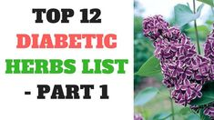 Top 12 Diabetic Herbs List  Part 1 | Diabetes Tips | Health Natural - WATCH VIDEO HERE -> http://bestdiabetes.solutions/top-12-diabetic-herbs-list-part-1-diabetes-tips-health-natural/      Why diabetes has NOTHING to do with blood sugar  *** best herbs for type 2 diabetes ***  Top 12 Diabetic Herbs List  Part 1 | Diabetes Tips | Health Natural Groundbreaking New Research Shows How to Reverse Type 2 Diabetes in 3 Weeks. Click Here:  If you have any question, please comment...