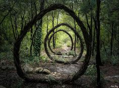 Forest land art by Spencer Byles