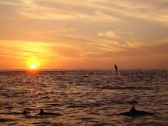 Google Image Result for http://www.costacetacea.com/images/708_Costa_Rica_Spinner_Dolphins_Fly_in_the_setting_sun_shawn_larkin2010.JPG