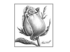 wie zeichnet man eine rose anleitung rose einfach. Black Bedroom Furniture Sets. Home Design Ideas