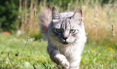outdoor cats15