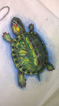 Turtle drawing Animal Drawings, Cool Drawings, Turtle Shells, Garden Mosaics, Snake Drawing, Turtle Painting, Animal Alphabet, Nature Study, Gcse Art