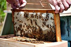 How to become a bee keeper! Crazy I know but I so want to do this someday!