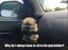 nice Funny Animal Pictures Of The Day - 22 Pics by http://dezdemon-humor-addiction.xyz/funny-animal-humor/funny-animal-pictures-of-the-day-22-pics-3/
