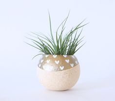 Air Plant Planter with Air Plant - Natural, Gold with White Hearts. par ThriftedandMade sur Etsy https://www.etsy.com/fr/listing/177381688/air-plant-planter-with-air-plant-natural