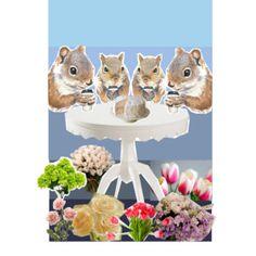Squirrel Cafe
