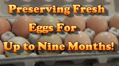Preserving Fresh Eggs For Up To 9 Months! Survival Food, Survival Prepping, Emergency Preparedness, Homestead Survival, Survival Skills, Food For Chickens, Raising Chickens, Preserving Eggs, Storing Eggs
