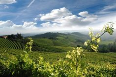 #italy Grinzane Cavour #langhe #roero This is an Italy Different destination.
