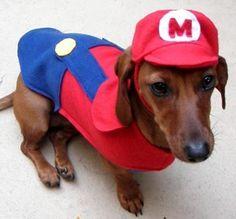 disfraz de anime para perro - Buscar con Google